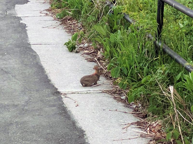 A bunny